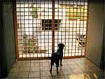 飼いたかった念願の犬、ブースコも土間が居心地の良い居場所。